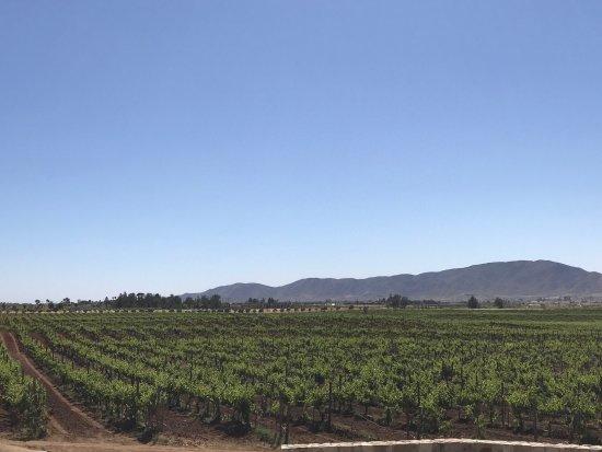 Valle de Guadalupe, Messico: Museo de la vid y el vino