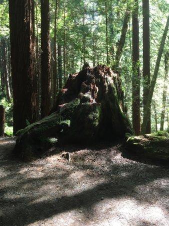 Klamath, CA: Trees of Mystery