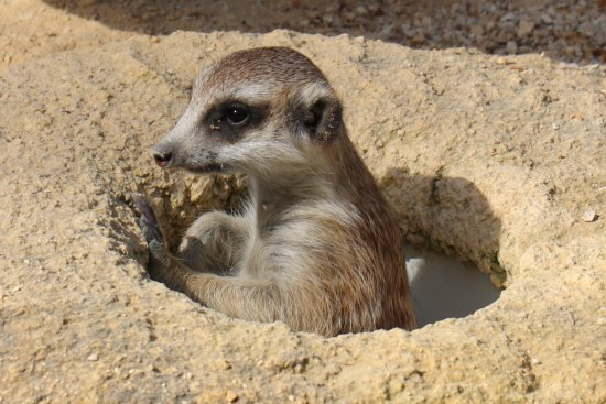 Nulkaba, Australien: Meerkat Manor