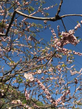 Hiraoka Park: photo4.jpg