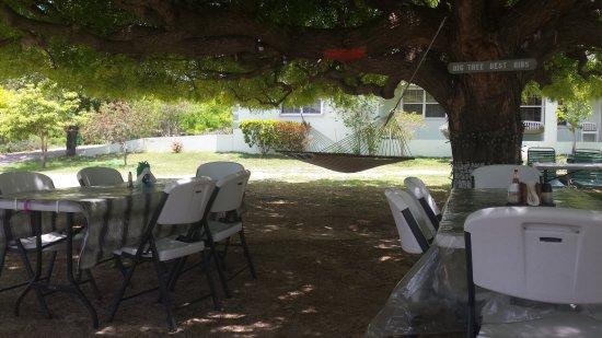 Gun Bay, Gran Caimán: Big Tree BBQ