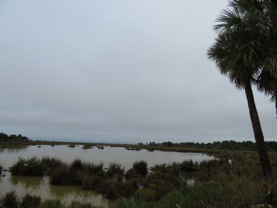 Merritt Island, فلوريدا: Marsh