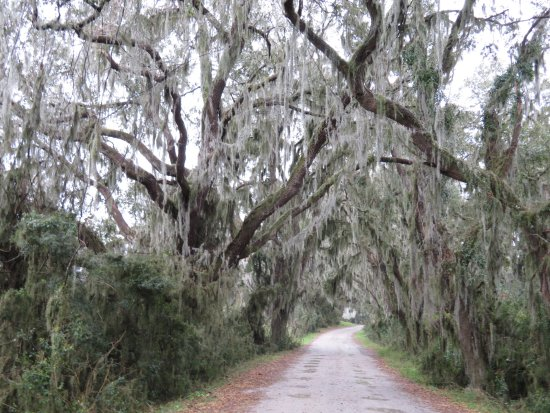 Hardeeville, SC: Beautiful moss-covered drive