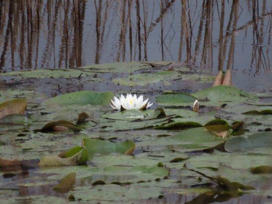 Hardeeville, SC: Pretty blossom