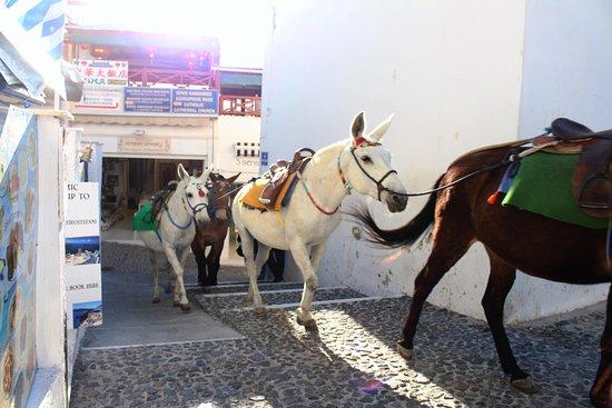 Private Santorini Tours - Private Day Tours: donkeys