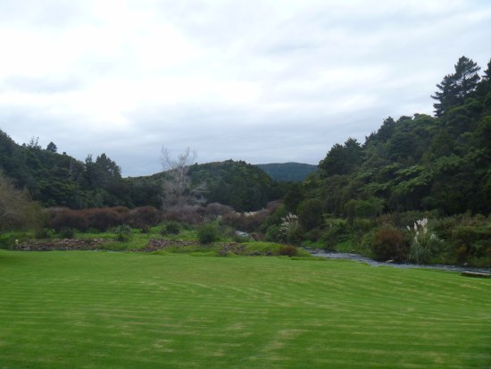 Dargaville, New Zealand: Campsites by the Kaihu river, absolutely glorious setting in native bush