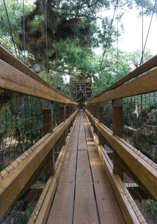 Myakka River State Park: Canopy Walk