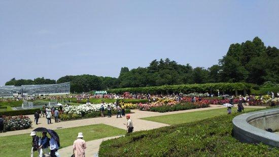 สวนพฤกษศาสตร์จินได