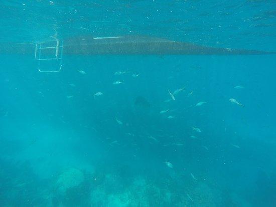 Ramrod Key, FL: Grouper unter dem Boot