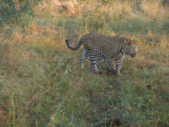 Umkumbe Safari Lodge: A serious 'spotting' expedition - pardon the pun!
