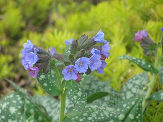 Boylston, MA: Unknown flower