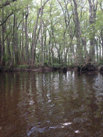 Aiken, SC: river trail
