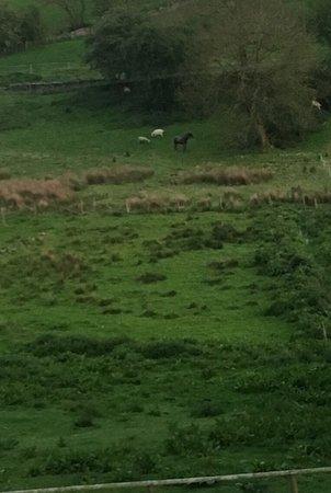 Gratton Grange Farm Bed & Breakfast: photo8.jpg