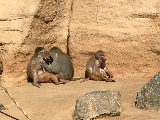 Koelner Zoo : photo6.jpg
