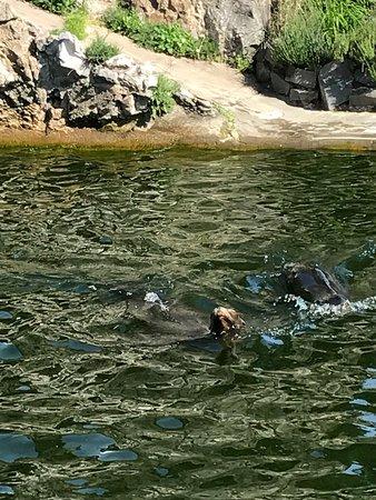 Koelner Zoo : photo7.jpg