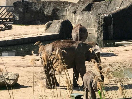 Koelner Zoo : photo9.jpg