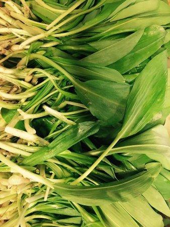 Bampton, UK: Wild Garlic