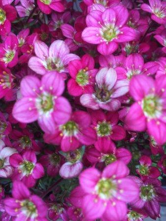 Glencarse, UK: Glendoick Gardens & Garden Centre. Gardens only open April & May. Garden Centre, Cafe and Gift S
