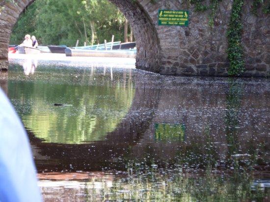 Saint-Lyphard, ฝรั่งเศส: Pont avec panneau pour le guide