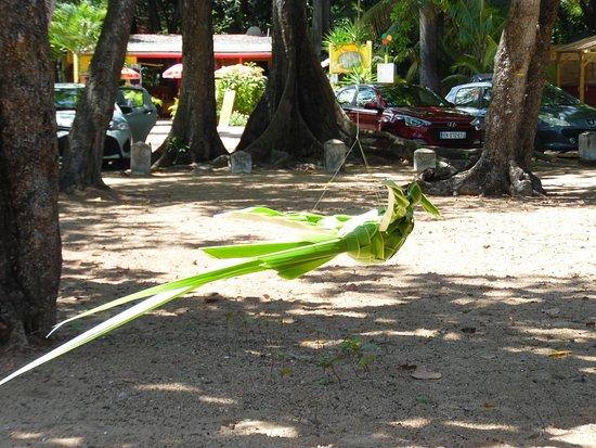 Deshaies, Guadeloupe: un oiseau de paradis