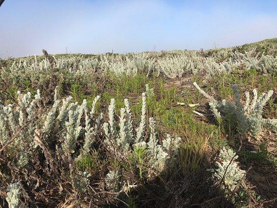 Moss Landing, CA: photo0.jpg