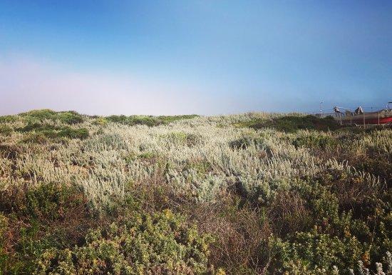 Moss Landing, CA: photo1.jpg