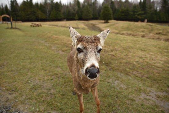 Montebello, Canada: Imega Parc