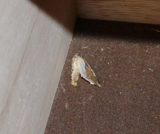 Benicia, CA: Dead bug in drawer