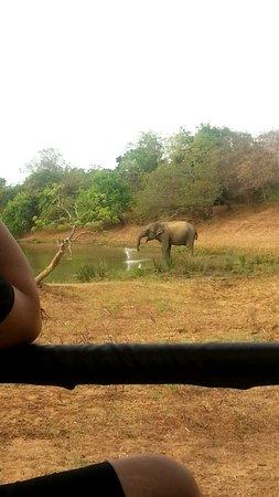Tissamaharama, Sri Lanka: Snapchat-432230620557466328_large.jpg