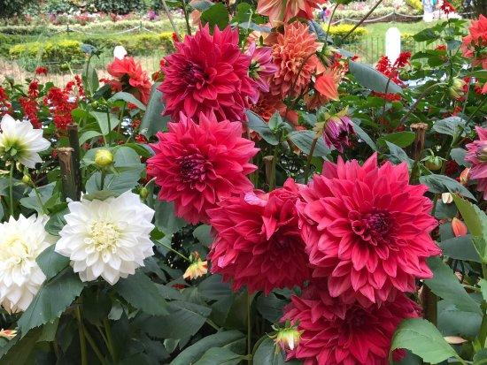 Beautiful flower garden better than botanical garden ooty sims park beautiful flower garden better than botanical garden ooty voltagebd Image collections