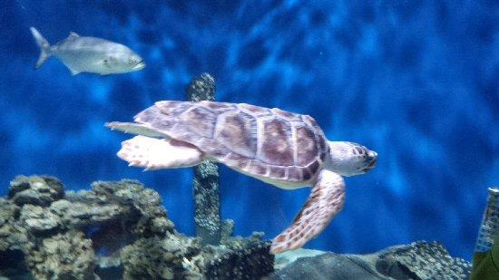 Virginia Living Museum: Sea turtle