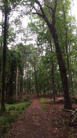Mistletoe Park: photo3.jpg