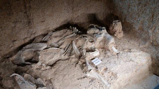Ουάκο, Τέξας: Bone uncovered and documented