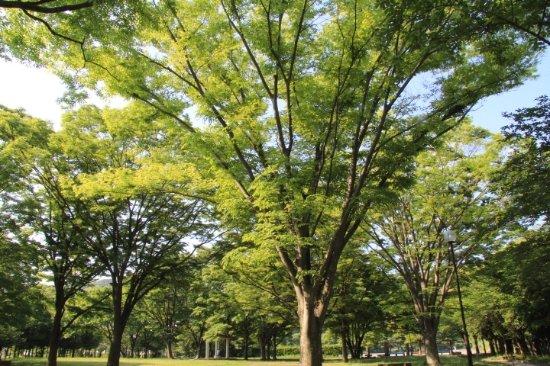 Shimmei Park