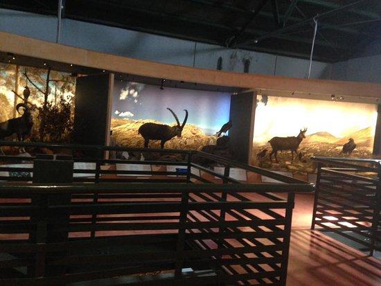 Μουσείο Φυσικής Ιστορίας Κρήτης: Экспозиция местных животных