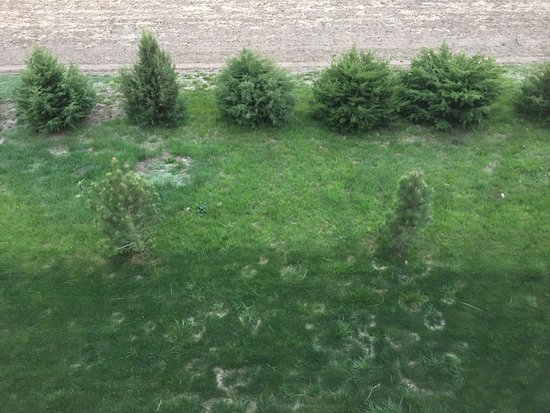 Burlington, CO: Green grass and junipers on the property below