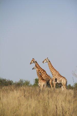 Hazyview, Sør-Afrika: photo5.jpg