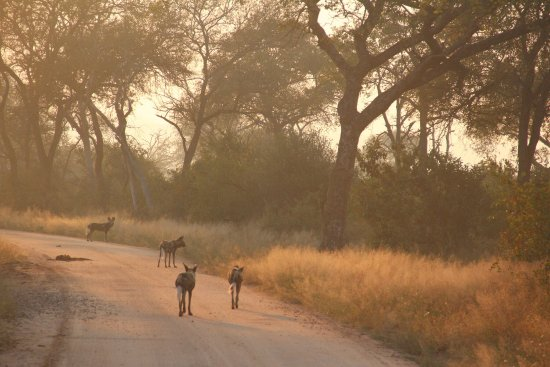 Hazyview, Sudáfrica: photo6.jpg