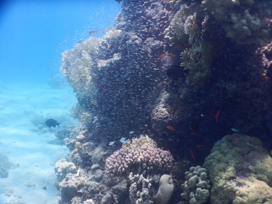 Shulamit's Eilat Diving Adventures: Just a sample