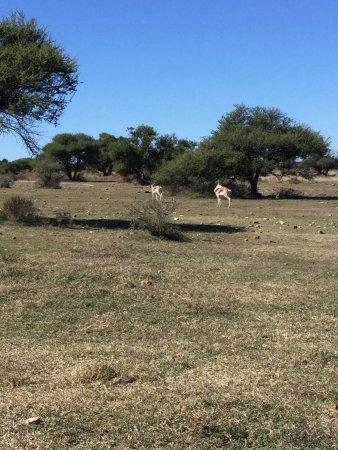 Mafikeng Game Reserve: photo2.jpg