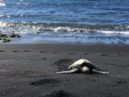 Punaluu Black Sand Beach: Ah!