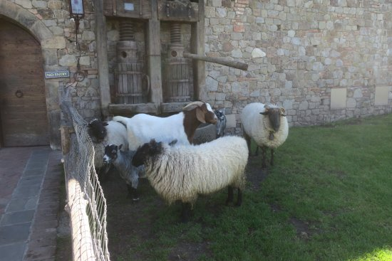 Calistoga, CA: Authentic castle with goats & sheep