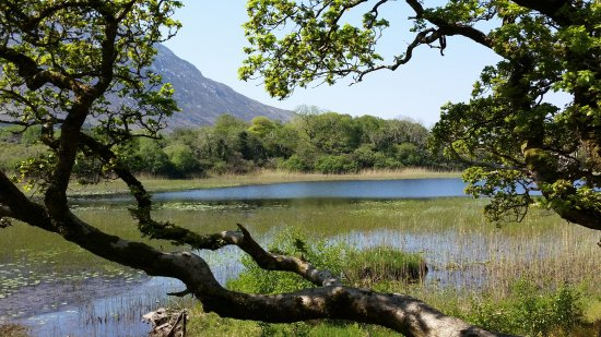Kylemore, Irlande : One of the scenes on a walk to the garden.