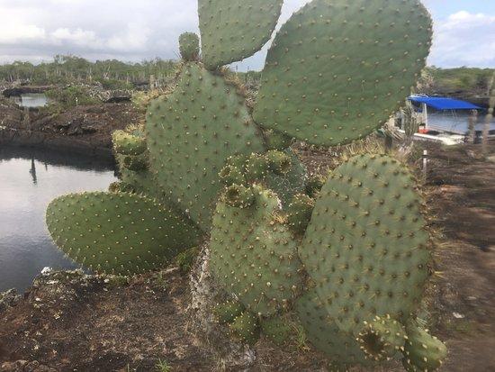 Puerto Villamil Bild