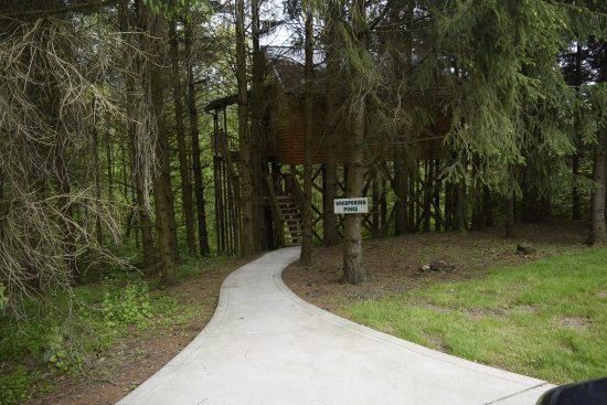 Pine Cove Lodging: Path to tree house