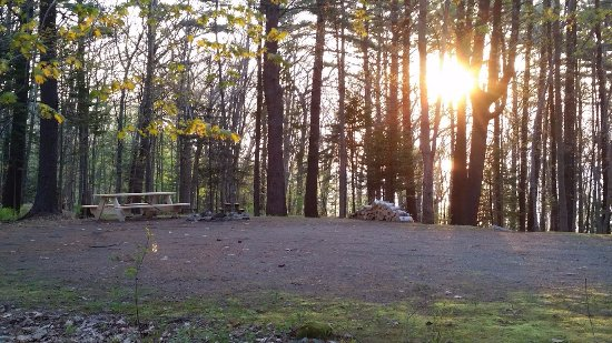 Rockport, ME: Sunrise through the trees. This could be YOUR tent site.