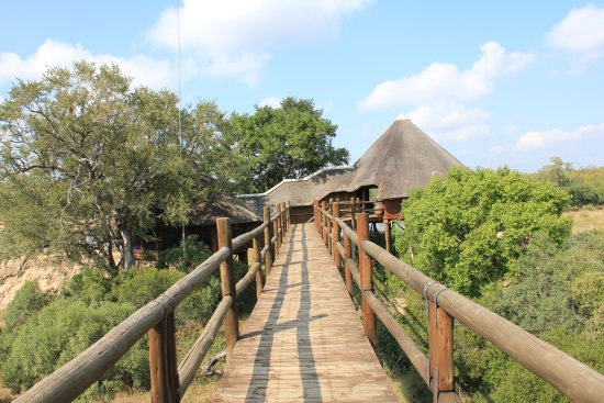 Ulusaba Private Game Reserve, Zuid-Afrika: Treehouse Suite