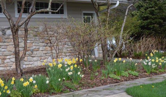 Baileys Harbor, วิสคอนซิน: Spring flowers