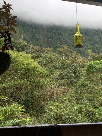 El Abrazo del Arbol: photo1.jpg