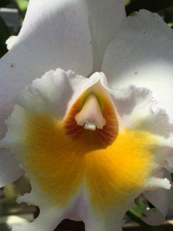 LaGrange, GA: White Orchid
